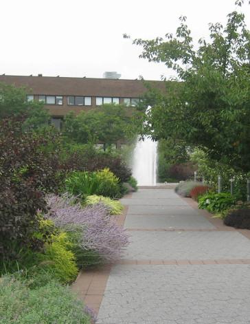 stonybrook-university-mpfp-background